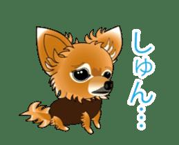 Pupu of Chihuahuas sticker #14974048