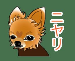 Pupu of Chihuahuas sticker #14974049