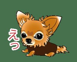 Pupu of Chihuahuas sticker #14974051