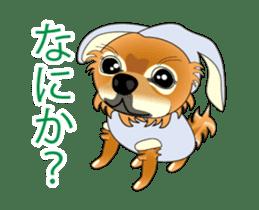 Pupu of Chihuahuas sticker #14974052