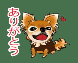 Pupu of Chihuahuas sticker #14974053