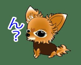 Pupu of Chihuahuas sticker #14974054