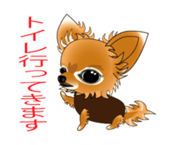 Pupu of Chihuahuas sticker #14974057