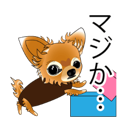 Pupu of Chihuahuas
