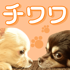Chihuahua [Azuki&Daizu]