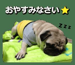 Pretty Pug!5 sticker #15032611