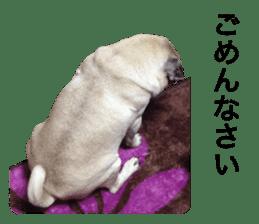 Pretty Pug!5 sticker #15032614