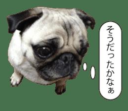Pretty Pug!5 sticker #15032615