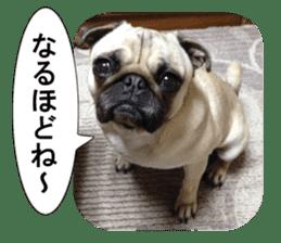 Pretty Pug!5 sticker #15032616