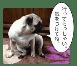 Pretty Pug!5 sticker #15032620