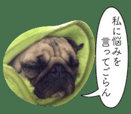 Pretty Pug!5 sticker #15032621