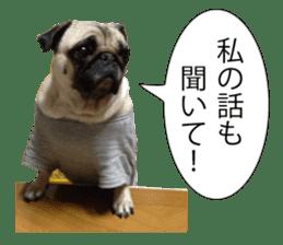 Pretty Pug!5 sticker #15032622