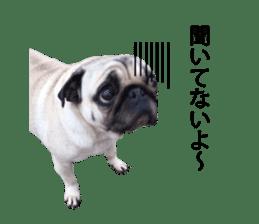 Pretty Pug!5 sticker #15032623
