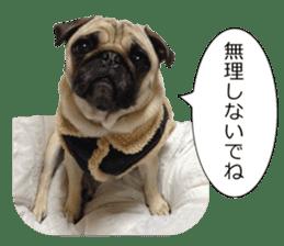 Pretty Pug!5 sticker #15032625