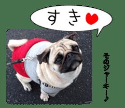 Pretty Pug!5 sticker #15032626