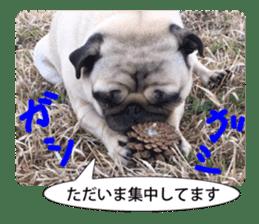 Pretty Pug!5 sticker #15032636