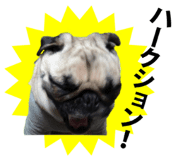Pretty Pug!5 sticker #15032638