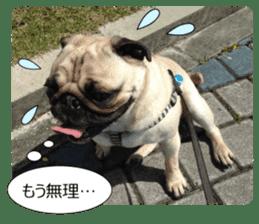 Pretty Pug!5 sticker #15032640