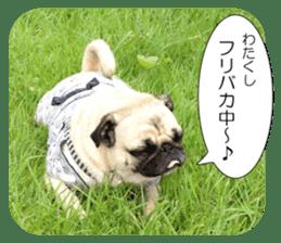 Pretty Pug!5 sticker #15032642