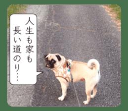 Pretty Pug!5 sticker #15032643