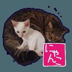 Gon&Jiromaru of a Cat