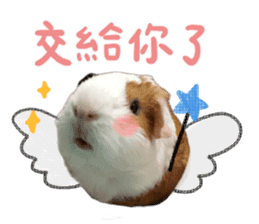 Guinea pig : eat & sleep - photo vol. 2 sticker #15156100
