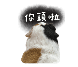 Guinea pig : eat & sleep - photo vol. 2 sticker #15156104