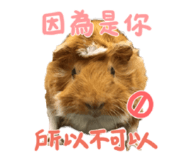 Guinea pig : eat & sleep - photo vol. 2 sticker #15156106