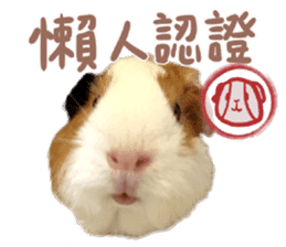 Guinea pig : eat & sleep - photo vol. 2 sticker #15156107