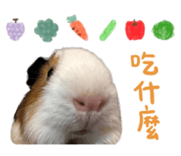 Guinea pig : eat & sleep - photo vol. 2 sticker #15156109
