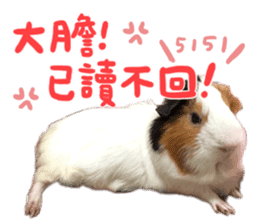 Guinea pig : eat & sleep - photo vol. 2 sticker #15156113