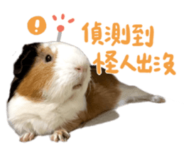 Guinea pig : eat & sleep - photo vol. 2 sticker #15156120