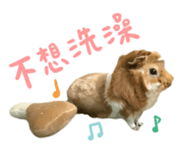 Guinea pig : eat & sleep - photo vol. 2 sticker #15156122