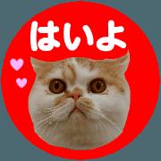 สติ๊กเกอร์ไลน์ all cat photo sticker1