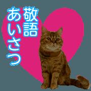สติ๊กเกอร์ไลน์ all cat photo sticker keigo