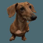 สติ๊กเกอร์ไลน์ 7 ne Queen Wanwan-real dog2