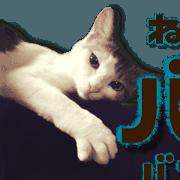 สติ๊กเกอร์ไลน์ Cat of Roux.<calico>