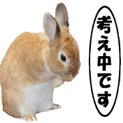 สติ๊กเกอร์ไลน์ active rabbit cocoa-4