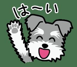Cute! Schnauzer Stickers sticker #15586618