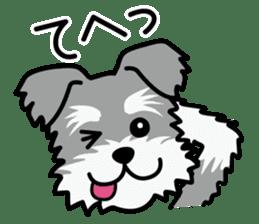 Cute! Schnauzer Stickers sticker #15586634