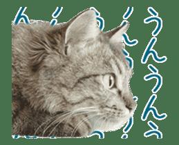 Hyper Cat! sticker #15634739