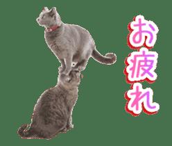 Hyper Cat! sticker #15634741
