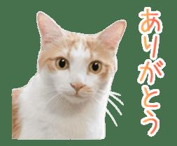 Hyper Cat! sticker #15634742