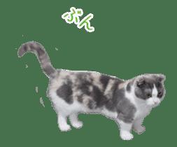 Hyper Cat! sticker #15634744