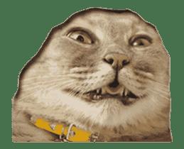 Hyper Cat! sticker #15634745