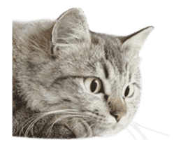 Hyper Cat! sticker #15634746