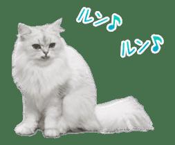 Hyper Cat! sticker #15634747