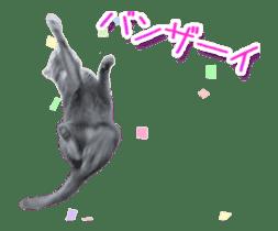 Hyper Cat! sticker #15634748