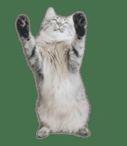 Hyper Cat! sticker #15634749