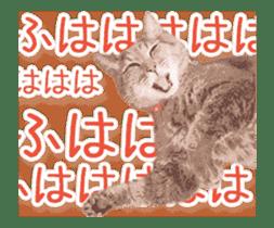 Hyper Cat! sticker #15634750